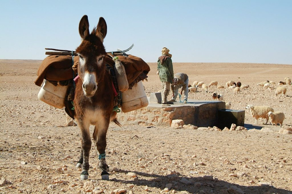 donkey carrying packs in the desert